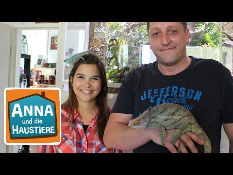 Chamäleon | Information für Kinder | Anna und die Haustiere