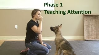 How to Train a Dog to Pay Attention (K9-1.com)