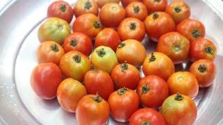 Village Food | Tomato chatni | Grandmother