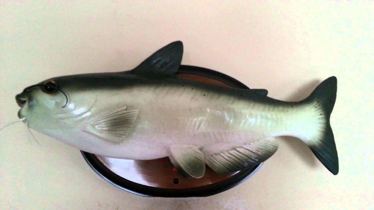 Cool CATfish - YouTube - photo#48