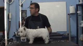 Clase de corte y stripping a un West Highland White Terrier