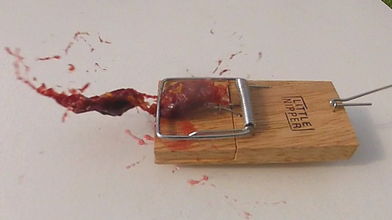 House Mouse Trap Damson in Mouse Trap Slow mo