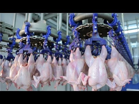 Modern Ultra Chicken Meat Processing Factory,  Amazing Food Processing Machines