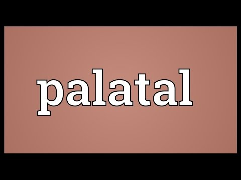 Header of palatal
