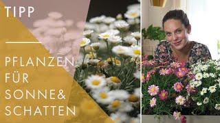 Balkonpflanzen für jeden Standort | Welche Blumen für viel und wenig Sonne!? | Home & Living UdPp