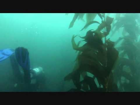 Diving California Kelp Forest Creepy Kelp Forest Dive