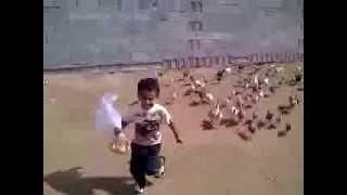 Niño dando de comer a las gallinas