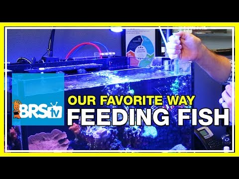 How Do We Feed Fish In Our 160 Gallon Reef