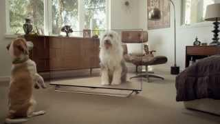 Publicidad . LG . Divertidos Gatos Y Perros Ven En 4K