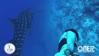 Ilaria Molinari. Incontro con lo squalo balena! Meet the whaleshark!