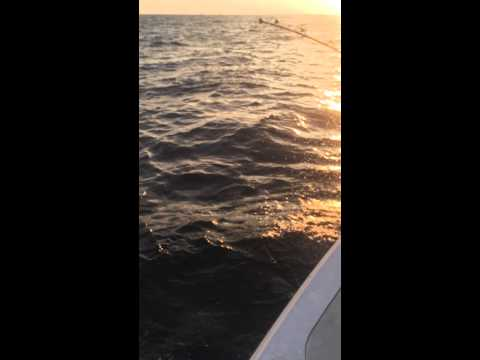 New Jersey Tuna Fishing