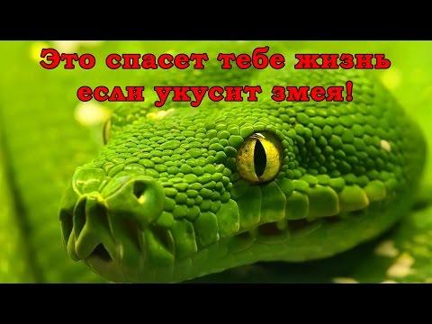 Год Змеи - Каждый из вас
