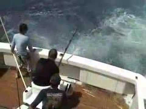 450 pound Black Marlin eaten by shark