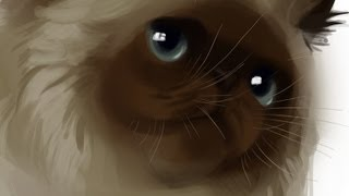 Cats - Speed Painting