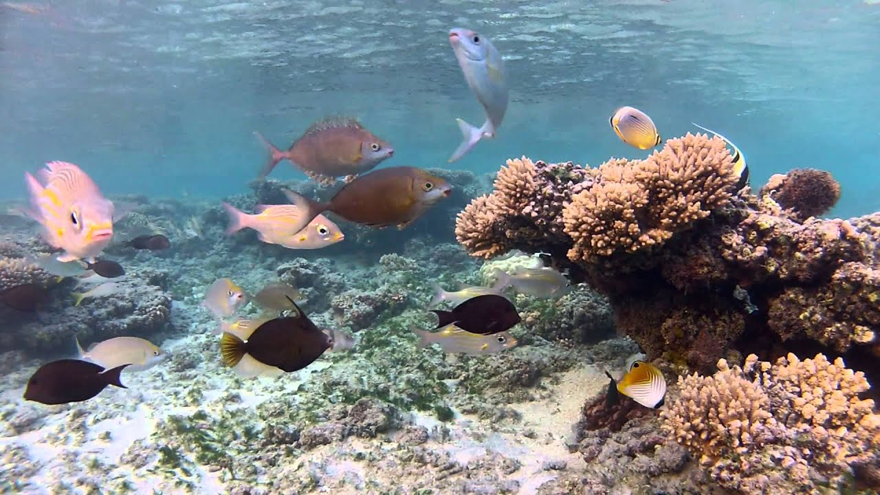 HD Open-Aquarium: Inside a Tropical Lagoon - YouTube