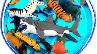 Learn Sea Animal Names and Zoo Animals Names Education Video For Kids