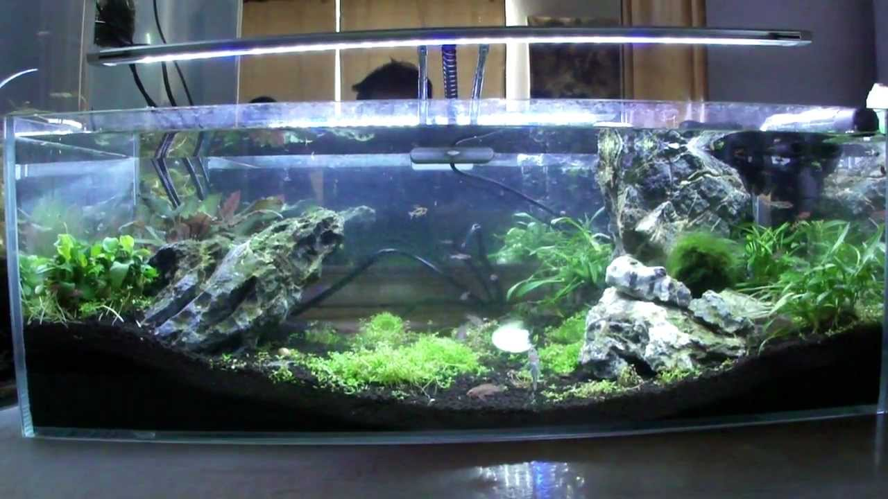 Our 6 Gallon Desktop Nano Amano Fish Tank Aquarium - YouTube