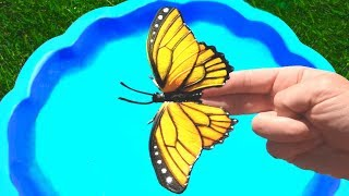 Learn Sea Animals and Wild Zoo Animals Names Learn Colors Video Toys For Kids