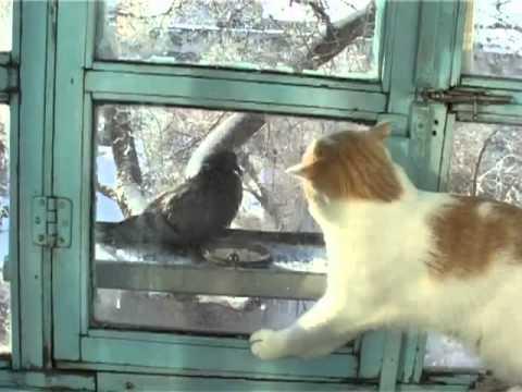 Naiwny kot