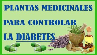 Plantas Medicinales para Controlar la Diabetes