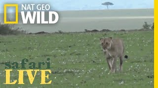 Safari Live - Day 52 | Nat Geo WILD