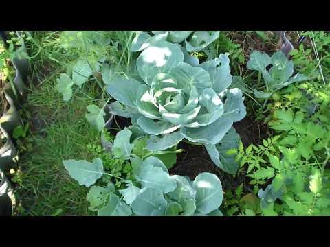 Максимум овощей на маленьком огороде