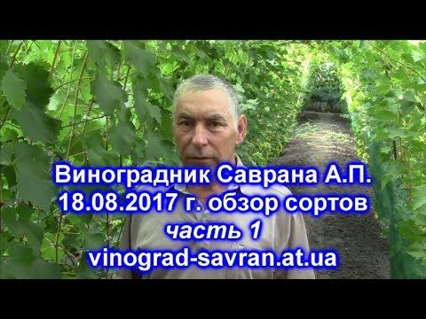 Виноградник Саврана А П  18,08,2017 часть1