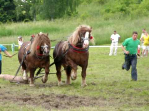 Rönkhúzó verseny Szlovákiában