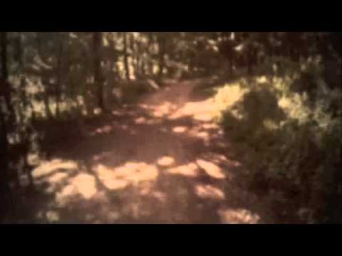 David J Roch - Skin And Bones