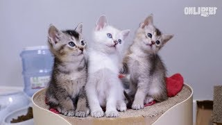 Click These Kittens And They will Take Your Time Away LOL