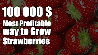 Most Profitable way to Grow Strawberries! 100 000$