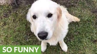 Dog left alone completely destroys backyard
