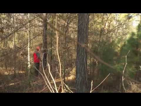 Woodcock Hunting In Arkansas