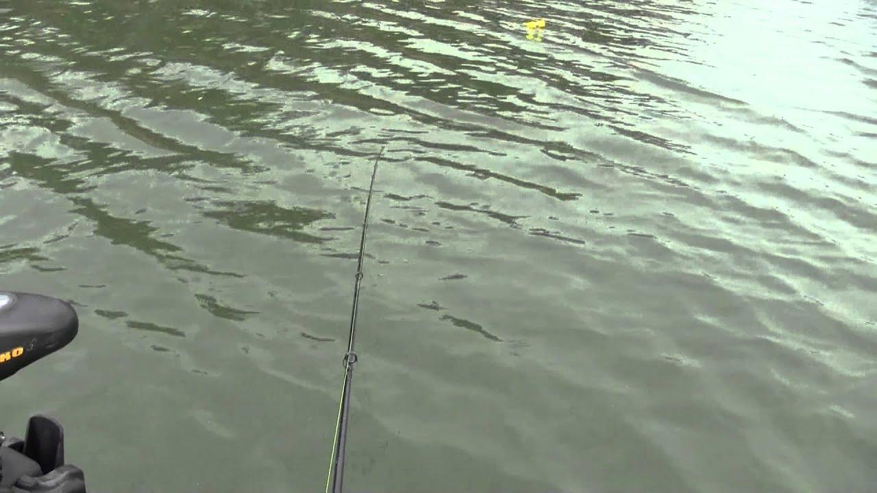 Melvern kansas spider rigging a brush pile youtube for Melvern lake fishing report