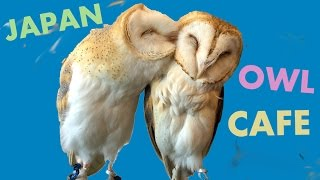 Cute Owl Cafe - Pet & Play with Owls in Japan!