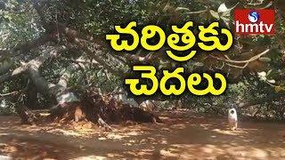 చరిత్రలో కలసిపోతున్న పిల్లలమర్రి ..! | hmtv Special Report