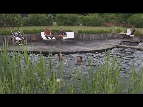 Эко-бассейн: рукотворный пруд у себя на участке - science