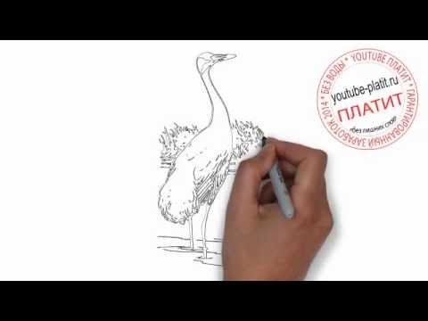Видео как нарисовать цаплю