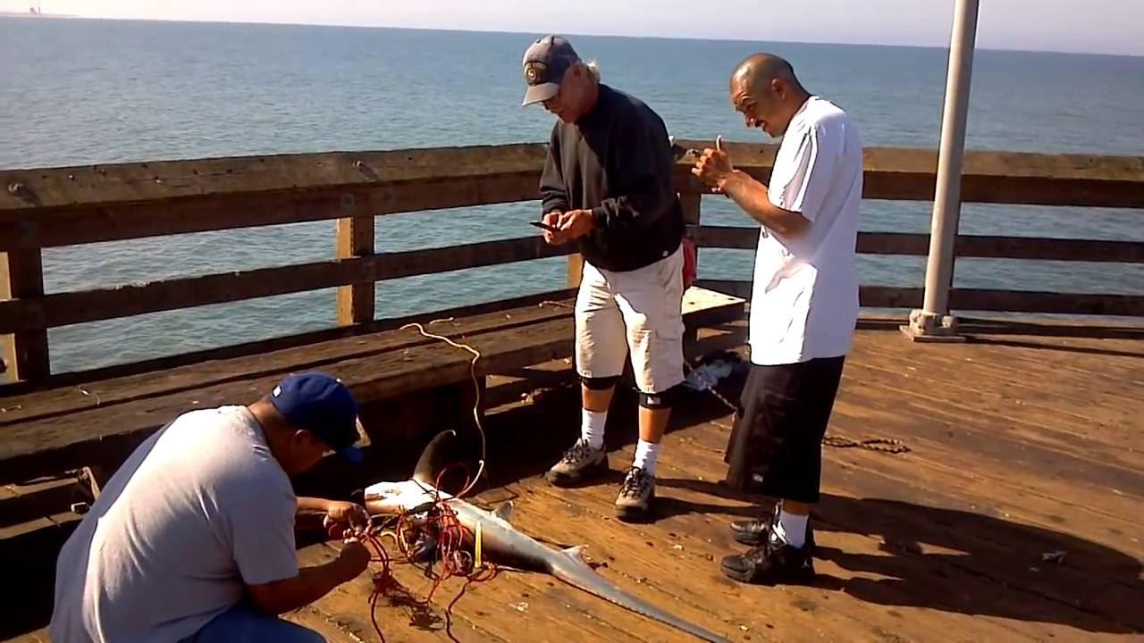 James brown catches his 1st thresher shark ventura pier for Ventura pier fishing