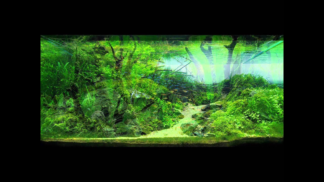 Beautiful Planted Aquariums (3) - YouTube
