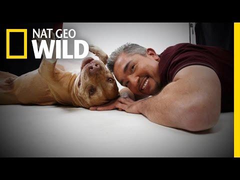 Daddy's History   Cesar Millan: Love My Pitbull
