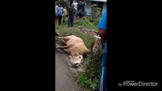 Animal slaughtering in Asia
