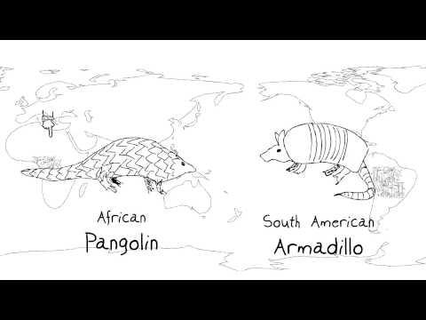 Ecosystem Biodiversity video