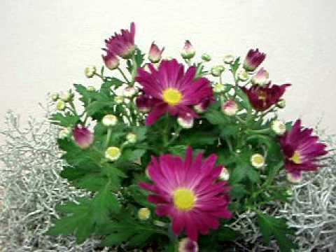 Liecivé rastliny sa šlachtia aj v univerzitnej záhrade v prešove