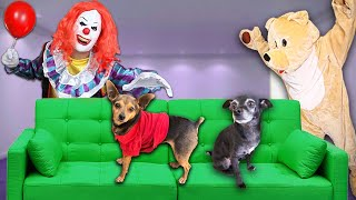 Pranking our Dogs with Halloween Costumes! (Creepy Clown Doll and Giant Bear) | PawZam Dogs
