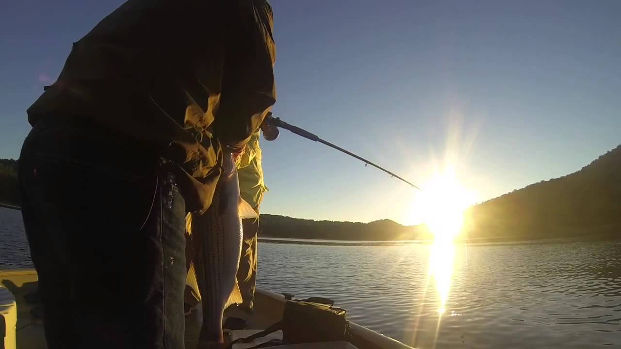 Norris lake tn striper fishing youtube for Norris lake fishing report