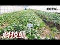 Lagu 《科技苑》 20180327 靠着大数据 不限时节种果蔬  CCTV农业