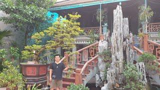 SH.2469.Ngỡ ngàng trước cây Hoa Giấy của anh Nguyễn tấn Hùng.Đại Bái. Gia Bình. Bắc Ninh