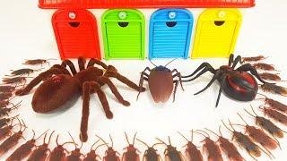 Pj Masks, Thomas, Tayo, Disney Cars, Giant Spider Monster Story for Kids