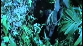 Kazhugu - Kazhugu Tamil Trailer